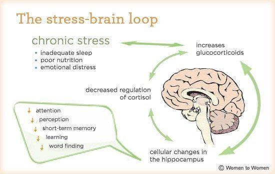 Stress Brain Loop